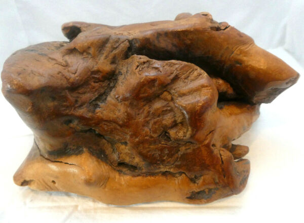Polished Burl Wood Tree Root Knot Rustic Decorative Wood Piece