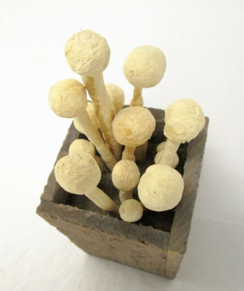 Vintage Sculpture of Mushrooms in a Wooden Box