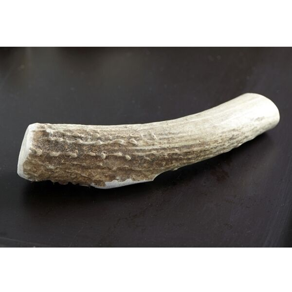 Deer Antler Chews for Dogs All Natural Sizes XS XL Non Odorous FREE SHIPPING $11.95