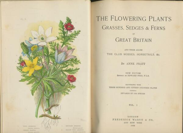 The Flowering Plants Grasses Sedges & Ferns of Great Britain and Their Allies t