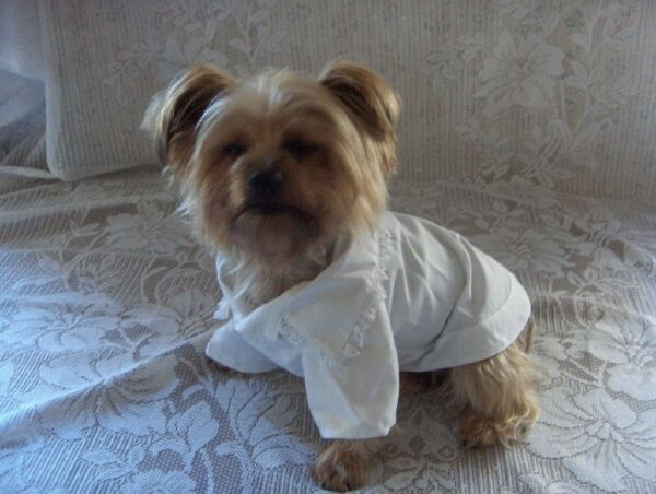 Dog Clothes White Lacy Blouse Sizes XXS - XS - Small Rock'N'Pooches Dog Apparel $7.99