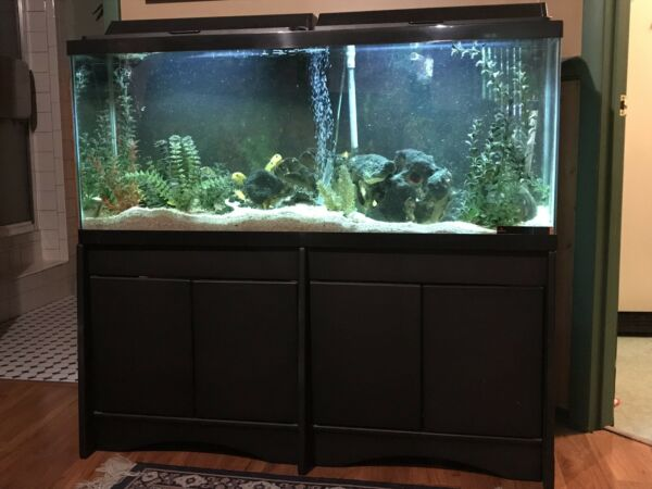 55 gallon fish tank w stand hood COMES READY COMPLETE w cichlids PICK UP ONLY $475.00
