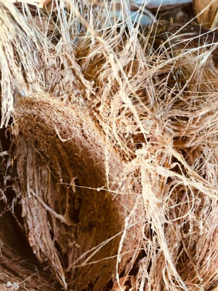 Coconut Husk with fiber coir natural for orchids and other plants $7.69