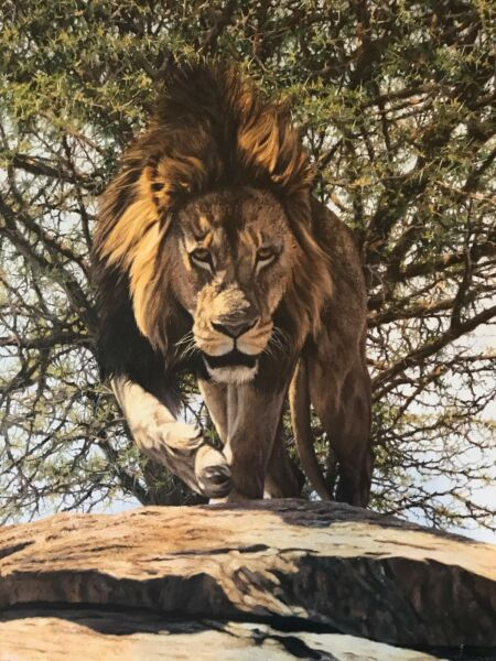 Simon Combes Original Painting Very Alpha Male Lion Coming Right At You Unique