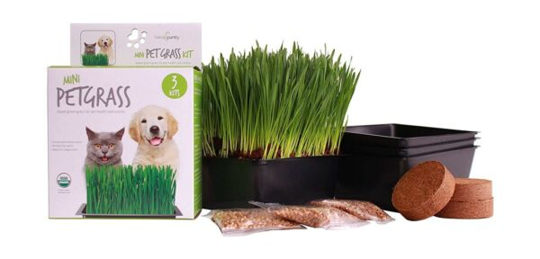 Handy Pantry Organic Cat Grass Kit Includes 3 Trays 3 Soil Pucks and 3 Pa...