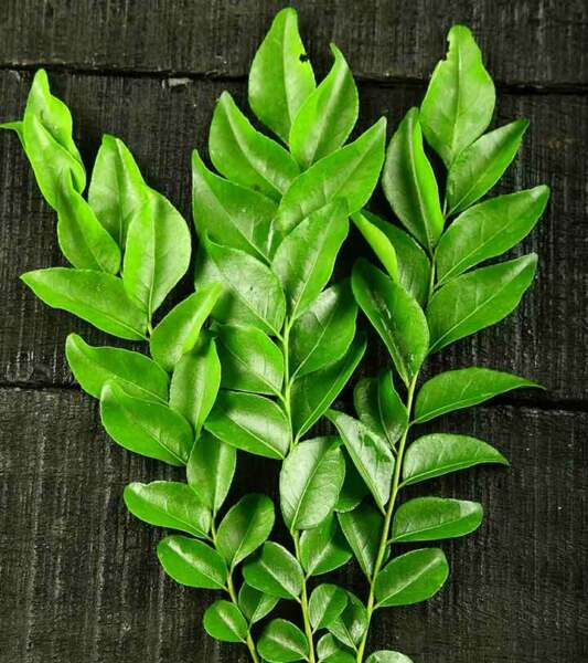 100% Organic Natural Home cultivate Sun Dried Curry Leaves From Sri lanka $4.85