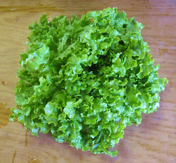 1000 SALAD BOWL LETTUCE 2018 (all non-gmo heirloom vegetable seeds!)