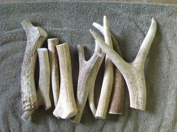 ANTLER CHEWS 3 Deer med large antler chews. FREE SHIPPING GREAT FOR YOUR DOGS $32.75