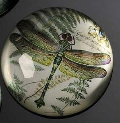 BOTANICAL GREEN  DRAGONFLY GLASS PAPERWEIGHT NEW