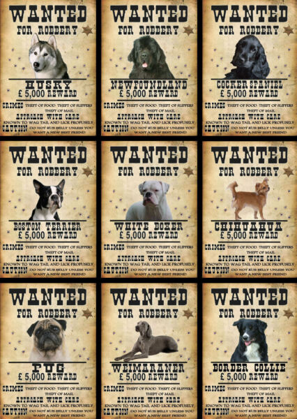 Beware Of The Dog Signs Wanted Various Breeds Set C GBP 3.30