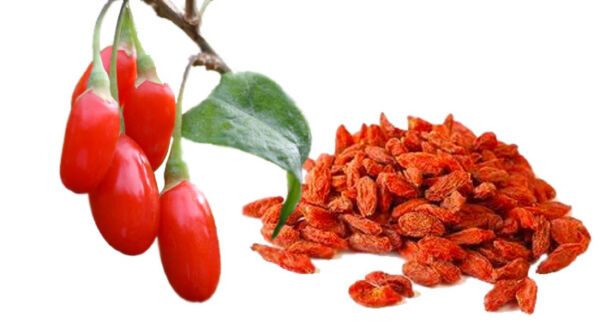 100 GOJI BERRY SEEDS 2019 (all non-gmo heirloom vegetable seeds!)