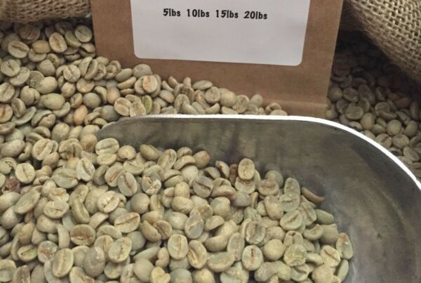 14# BRAZIL SANTOS UNROASTED GREEN COFFEE BEANS. PULPED NATURAL. ARRIVED 6518