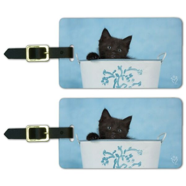 Black Kitten Cat in Bucket Tin Pail Luggage ID Tags Carry-On Cards - Set of 2