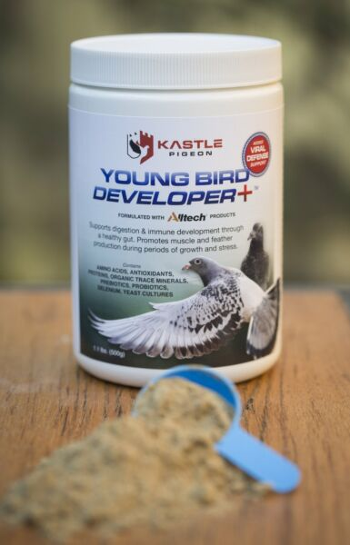 Young Bird Developer Plus probiotics virus defense and immune boost for pigeons