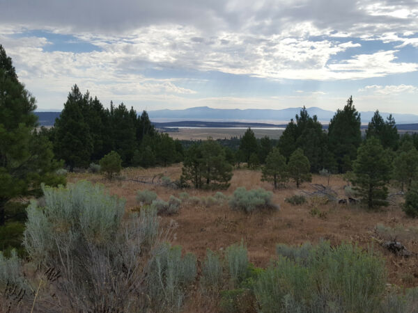 TWO ADJOINING LOTS IN BEAUTIFUL CALIFORNIA PINES - MODOC COUNTY