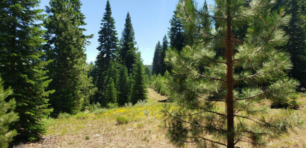 BEAUTIFUL LOT IN CALIFORNIA PINES - USE IT WHILE YOU PAY FOR IT!