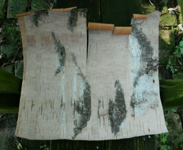 Natural White Birch Bark Approximately 15quot; x 15quot; #17
