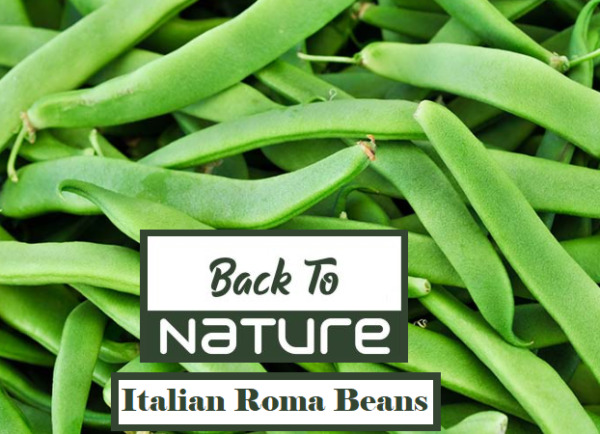Italian Roma Beans Non Gmo Grow Your Own Green Beans Right At Home