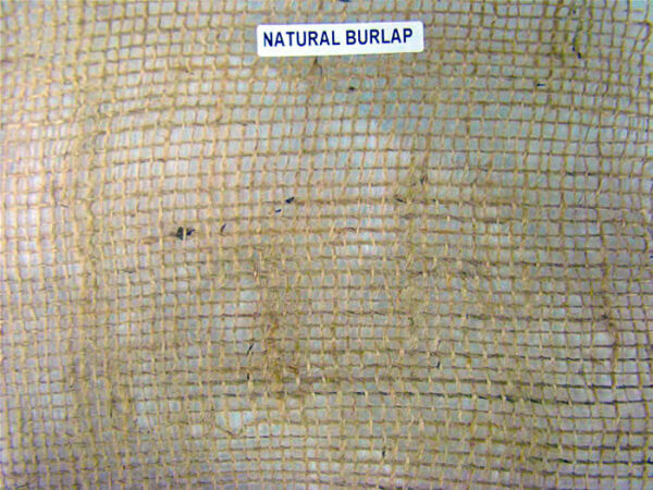 Natural Burlap; Weed Control  Tree Wraps  Plant Protection  Vegetable Garden