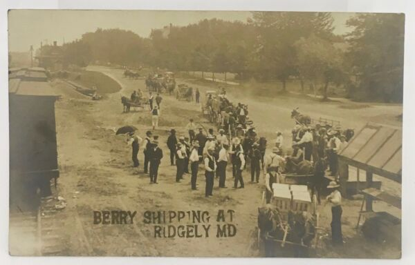 Antique c1905 Berry Fruit Crates Grocery Horse Wagon Ridgely MD Photo RPPC