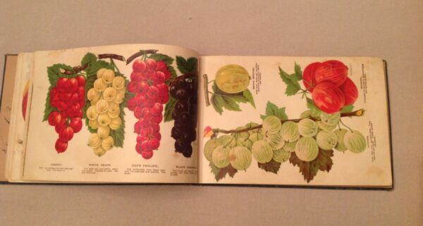 Fruit Floral And Tree Salesman Sample Book  Fairview Nursery Lancaster PA 1908