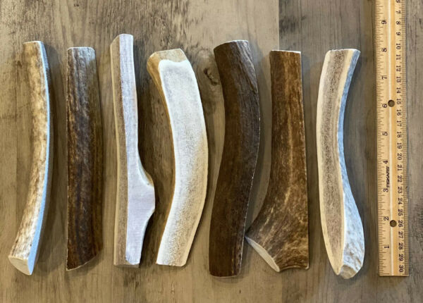 "(1) LARGE SPLIT 7""+  ELK **NATURAL SHED** Antler Premium Dog Chew (1 Ea) $8.60"