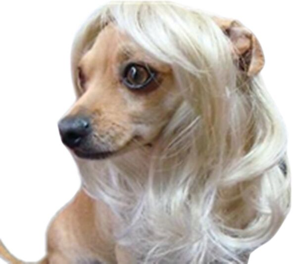 Us Dog Costumes Colorfull Synthetic Hair Pet Wig Lovely Pet Dog Wigs Blonde $8.99