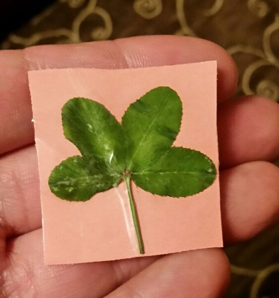 Real 4 Four Leaf Clover 2 for $1.00