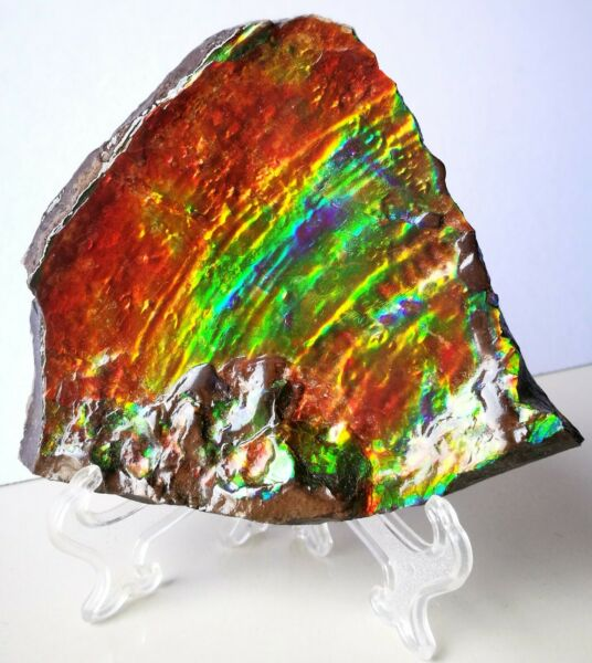 Top AAA Quality Natural Rare Canadian Ammolite Rock TableTop Gemstone Specimen.