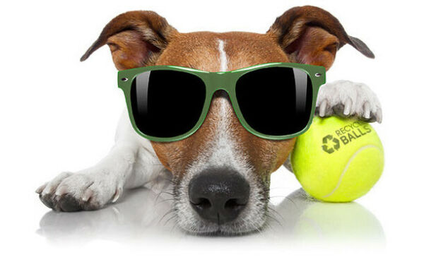 25 used tennis balls - Ideal Dog & Play Mix - FREE SHIP - Support our nonprofit! $15.90