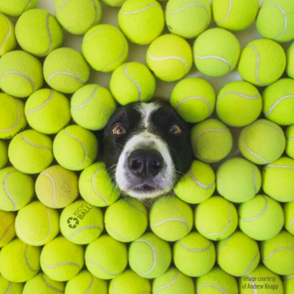 100 used tennis balls LOW COST DOGGIE BALLS FREE SHIP SAVE 10% $34.95