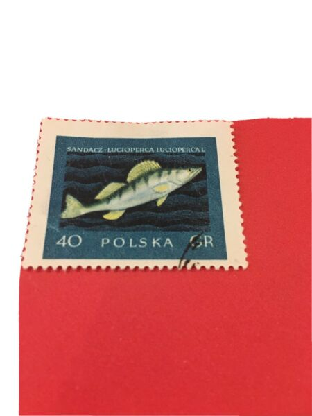 Poland:1958 Fish 40 Gr. Rare amp; Collectible Stamp. GBP 0.99