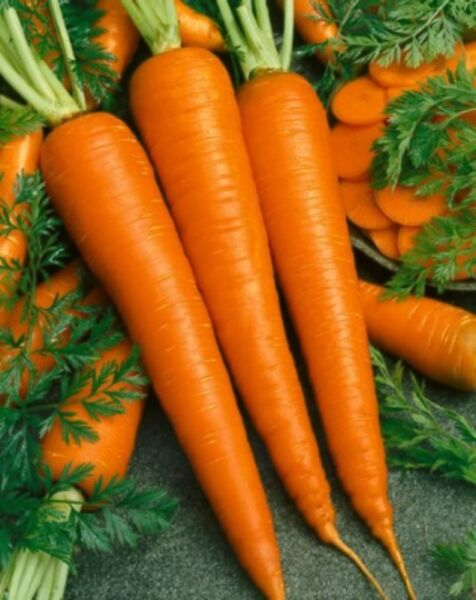 300 IMPERATOR 58 CARROT SEEDS HEIRLOOM 2019 (non-gmo heirloom vegetable seed)