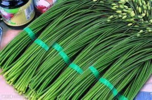 150 GARLIC CHIVE 2018 (all non-gmo heirloom vegetable seeds!)