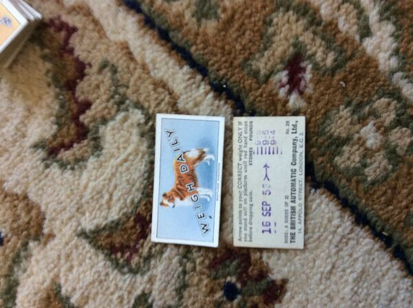 BRITISH AUTOMATIC DOGS 1ST SERIES WITH WEIGH DAILY # 26 shetland sheepdog GBP 1.75