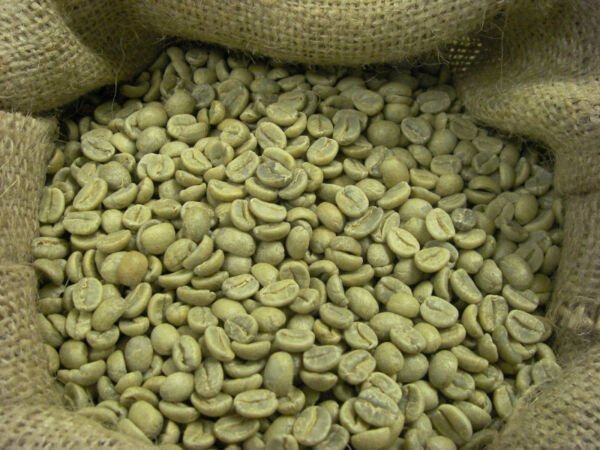 5 LB Green Coffee Beans - Honduras
