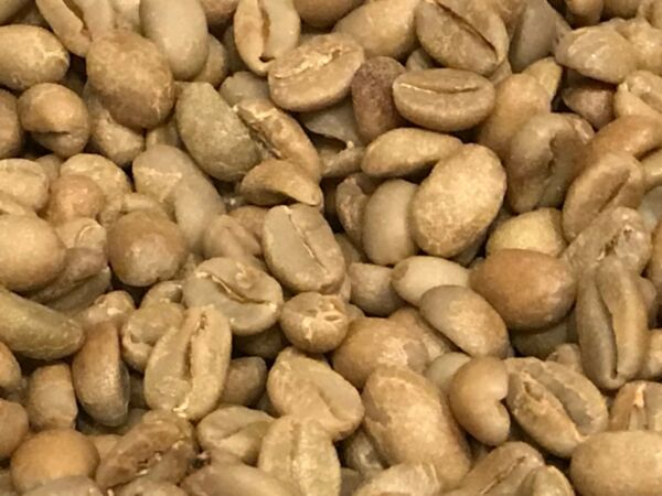 green coffee beans Ethiopia Limu Natural Process Organic 5 pounds. NICE COFFEE