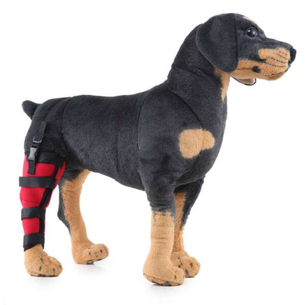 Dog Leg Brace Hock Joint Knee Support Pet Right Hind Leg Protector L Size $10.10