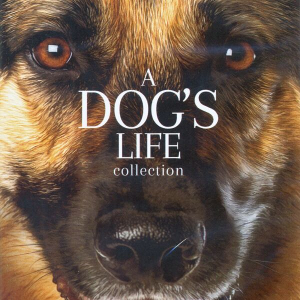 4 PG dog movies new DVDs: Cool Dog Finding Rin Tin Tin Surviving Wild Angel $11.99