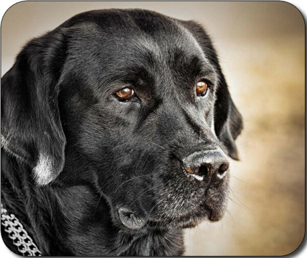 Black Labrador Dog Large THICK Mousepad Mouse Pad Great Gift Idea $7.99