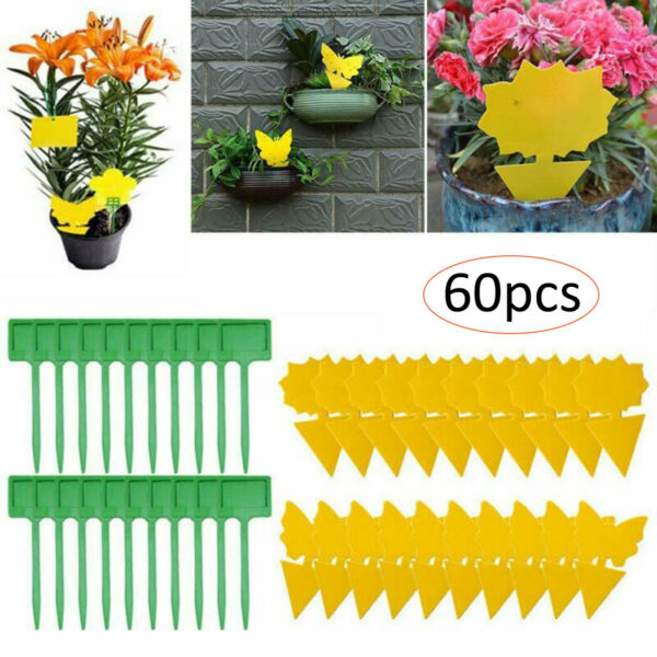 60pcs Sticky Trap Fruit Fly And Fungus Gnat Trap Killer Indoor And Outdoor Sets C $18.94