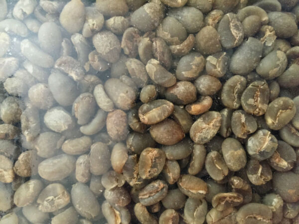 5 LB Indonesia Java Green Coffee Beans RESERVE LISTING
