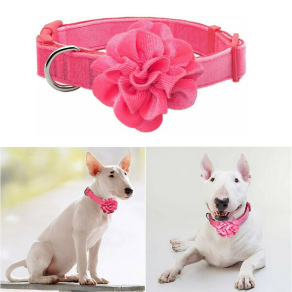 Flower Dog Collars Velvet Dog Collars with Removable Flower Accessories $8.99