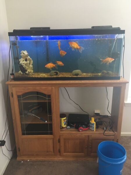 55 gallon fish tank with supplies $350.00