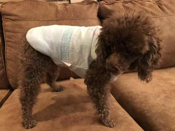 Small breed dog clothes $9.79