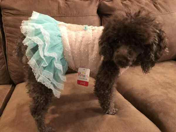 Small breed dog clothes $8.89