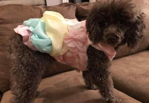 Small breed dog clothes $9.99