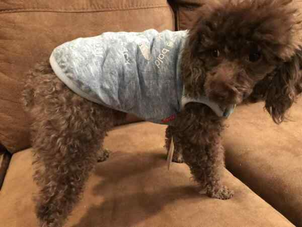 Small breed dog clothes $5.99