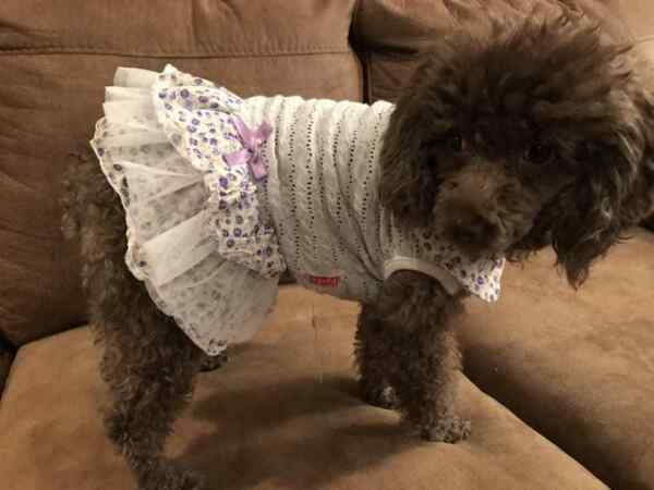 Small breed dog clothes $6.99