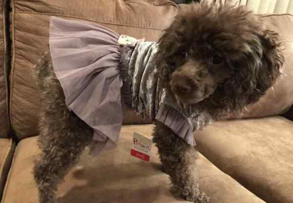 Small breed dog clothes $8.79